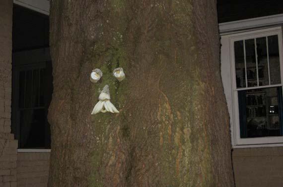 tree_face.jpg