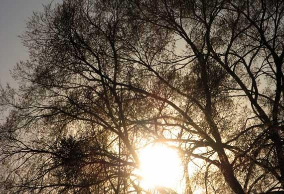 sun_tree.jpg