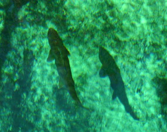 fish_big.jpg