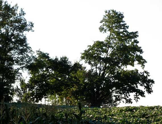 tree_de_benson.jpg