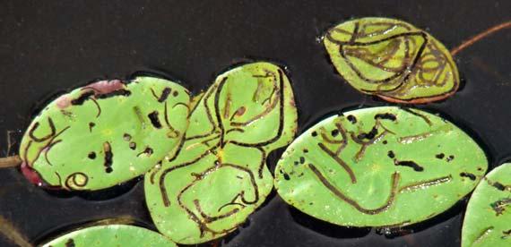leaves_mined.jpg