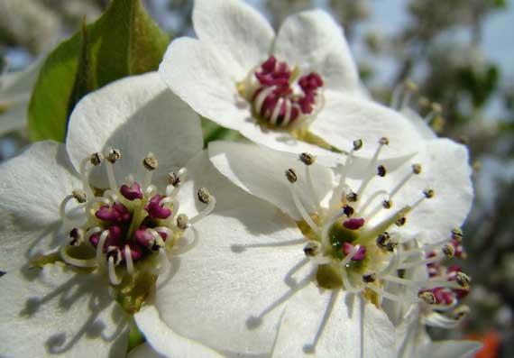 fruit_bloom.jpg