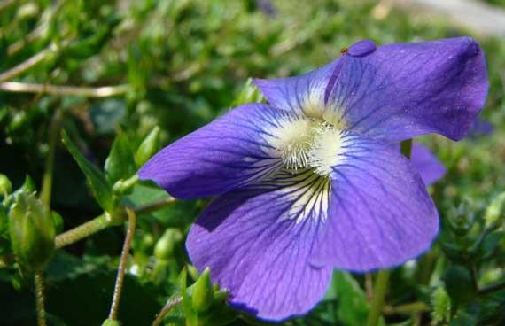 yard_violet.jpg