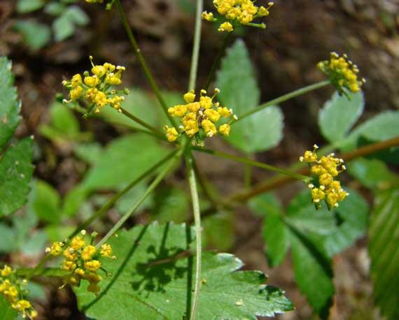 flower_yellow_wild.jpg