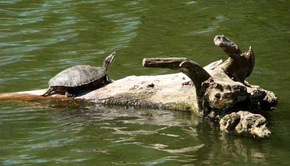 turtle_clara_meer.jpg