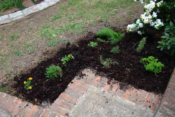 herb_garden_transplanted.jpg