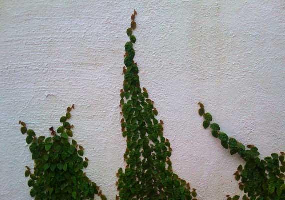 wal_greens.jpg