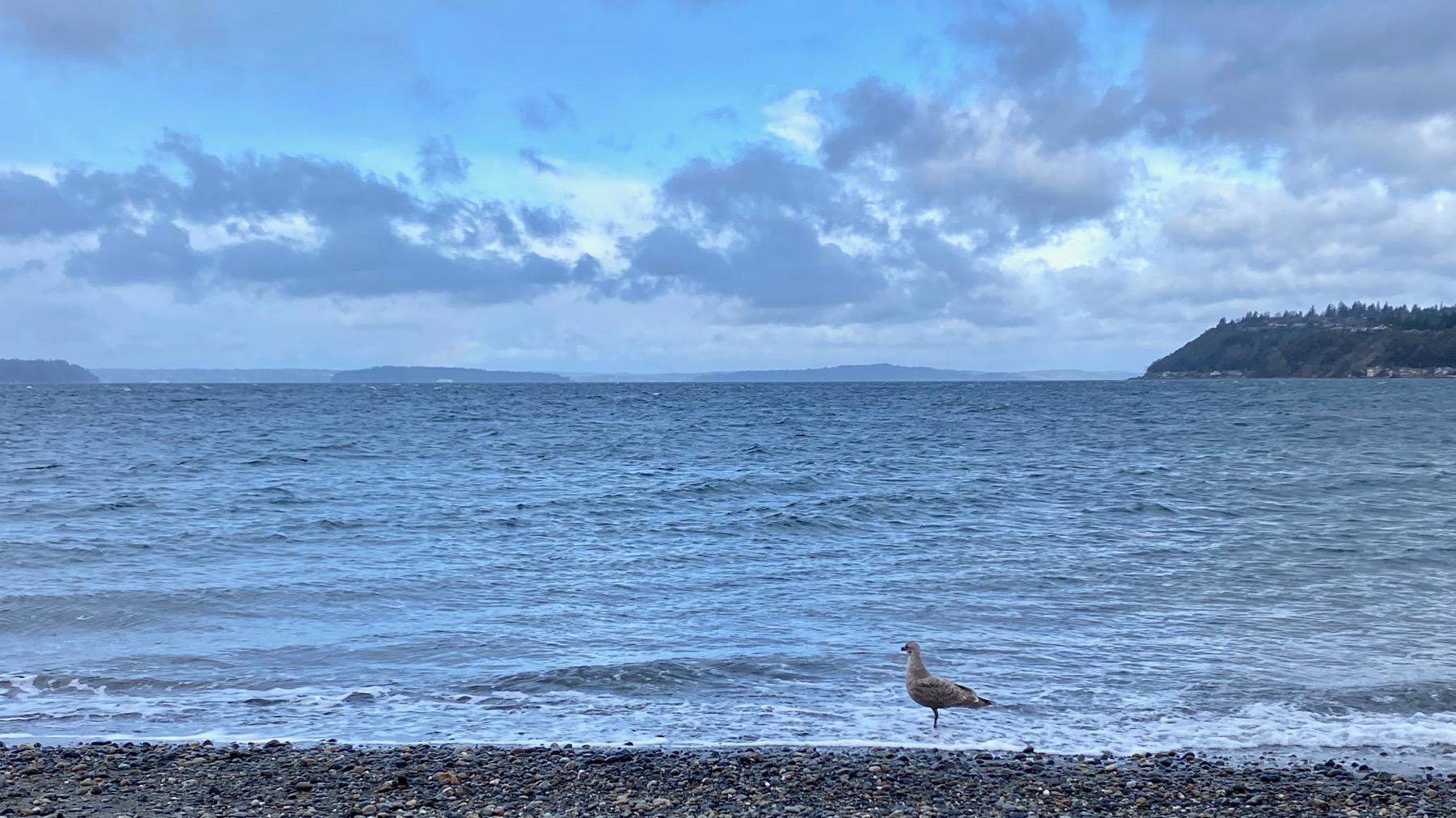 Gull beach