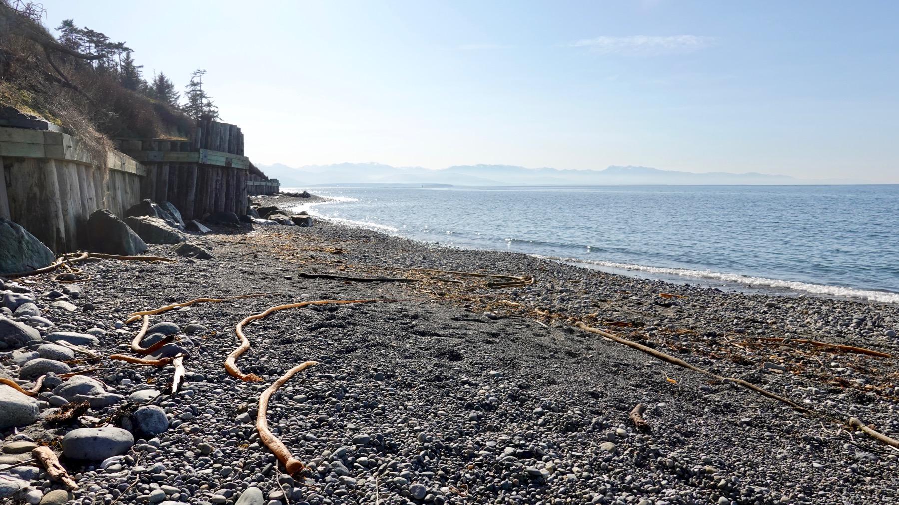 Kelp beach