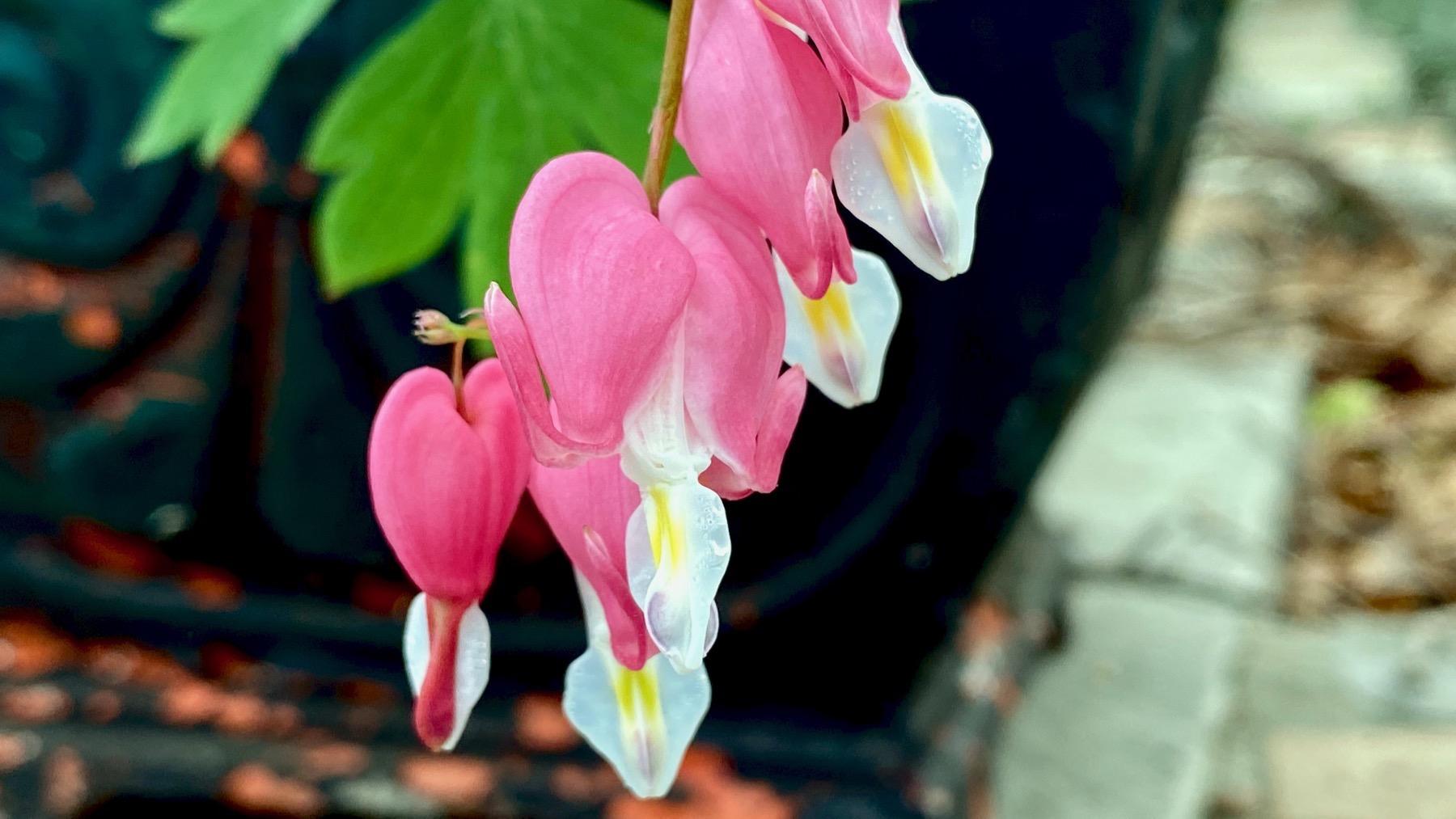 Dunno fleurs
