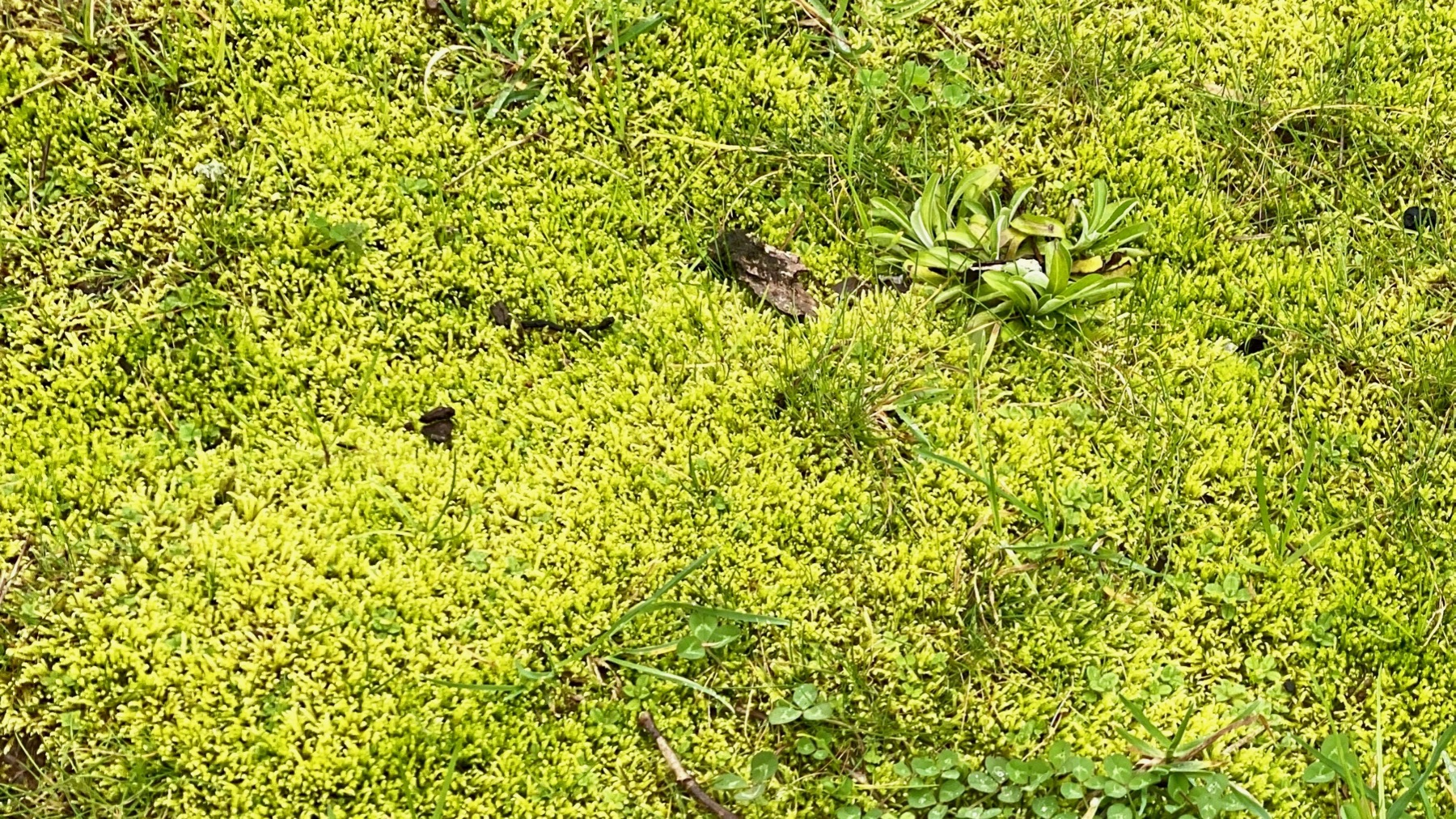 Moss vibrant