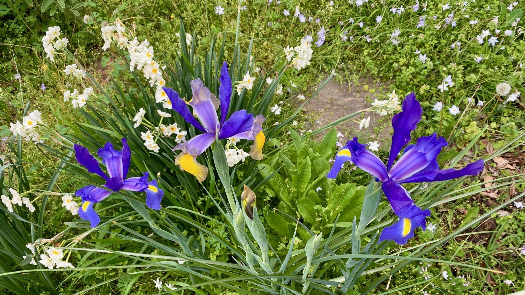 Spring meadow garden