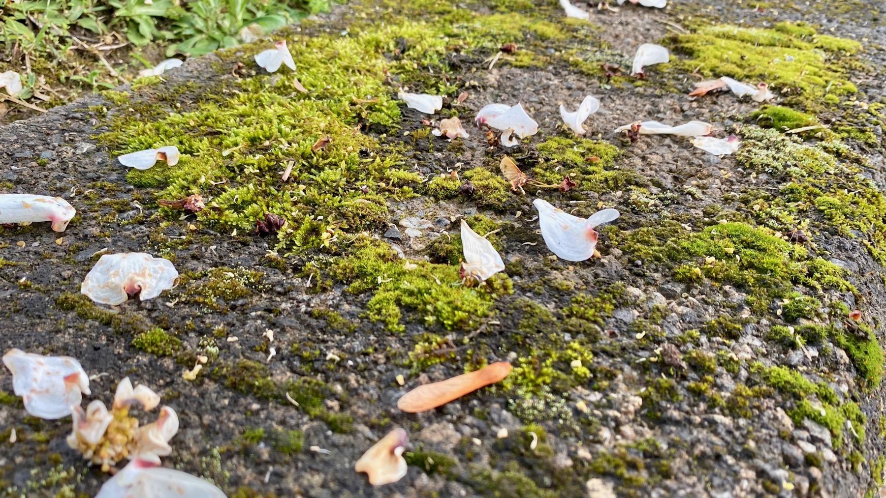 Moss petals