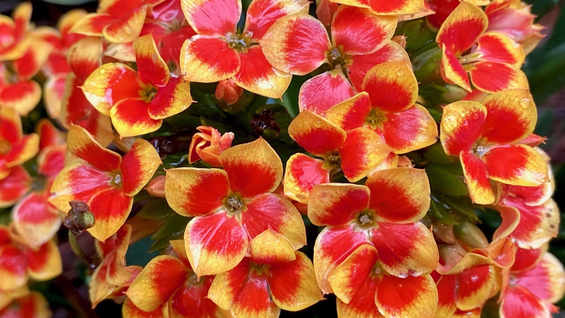 Unk flowers