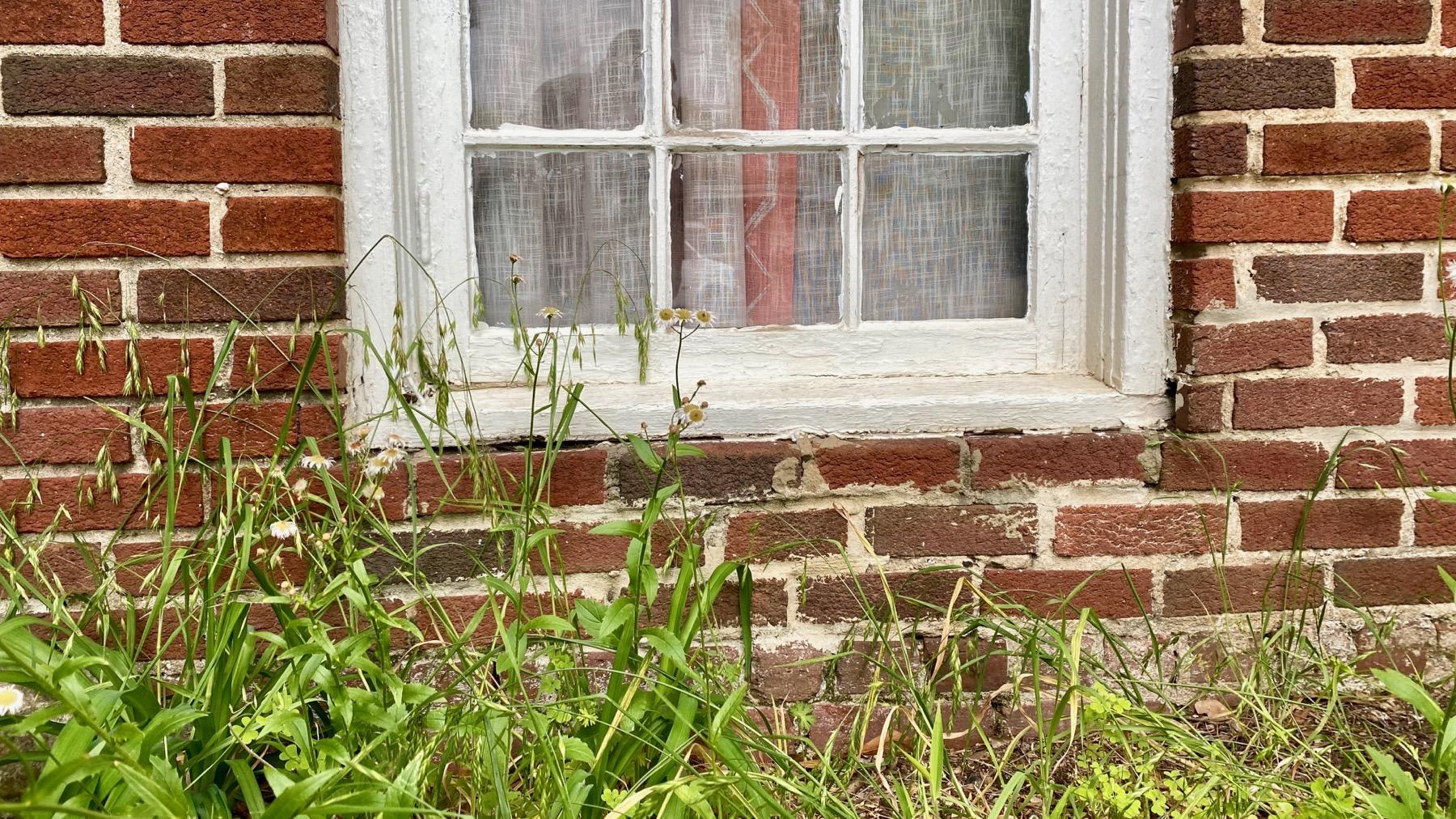 Window weeds