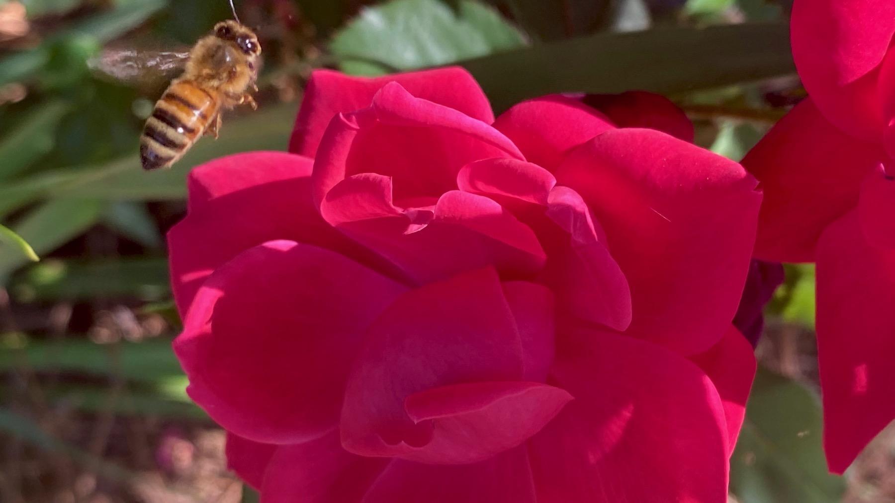 Backup bee