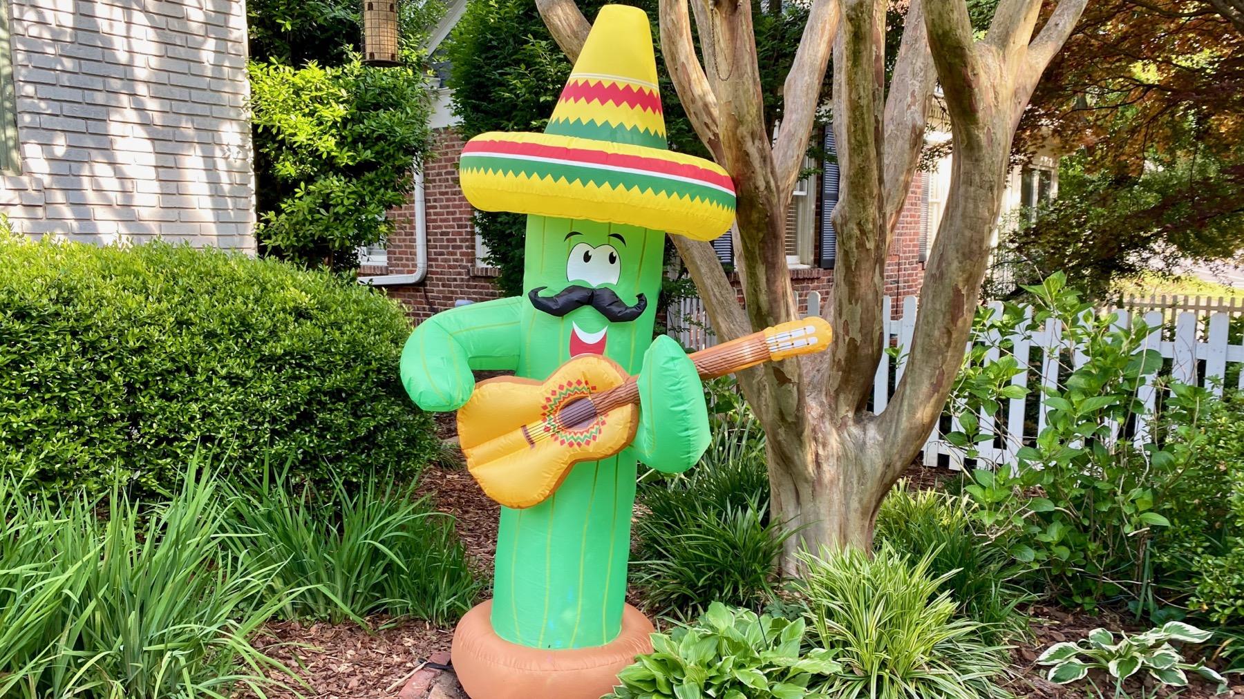 Musical cactus
