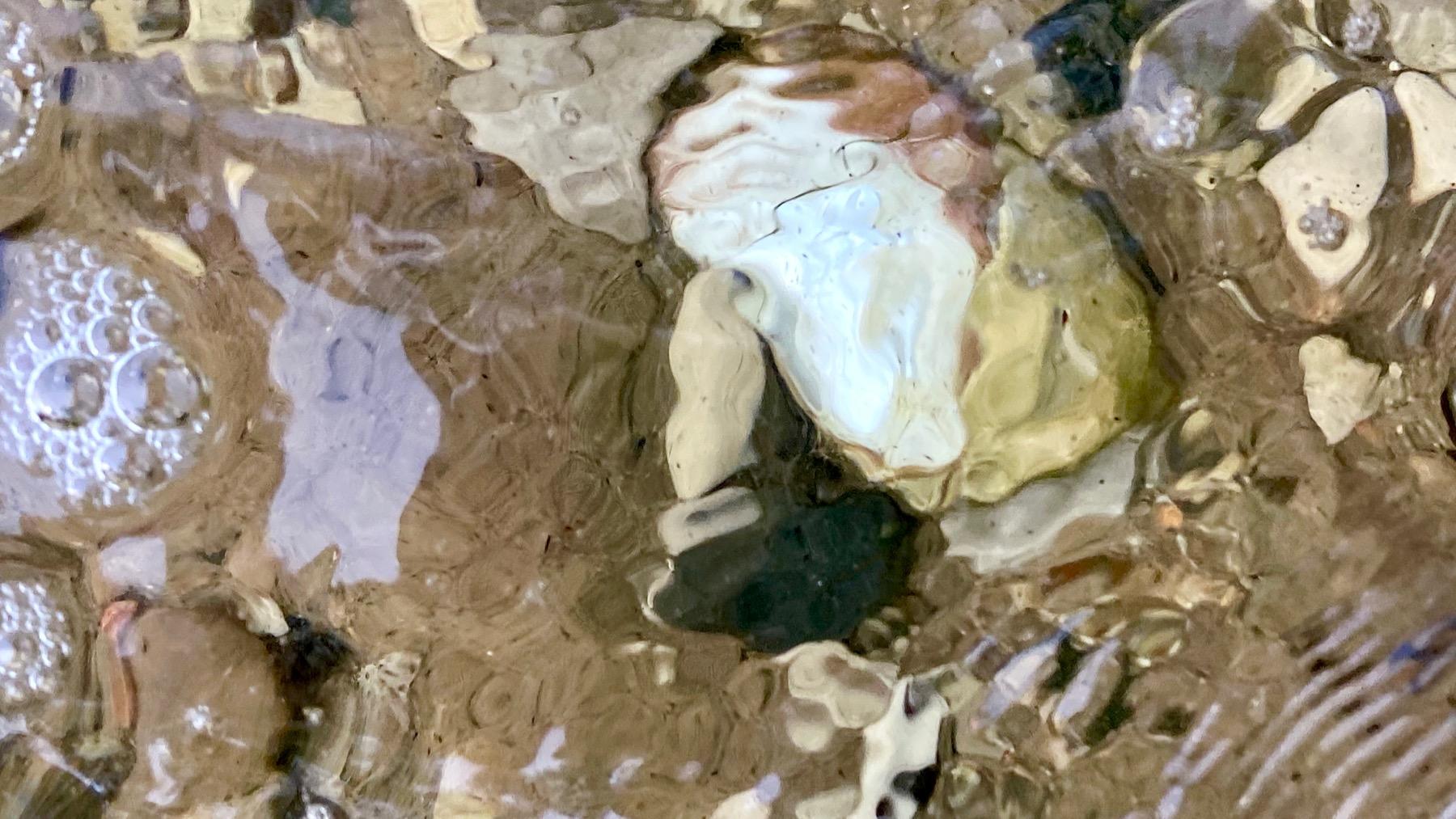 Shell rippled