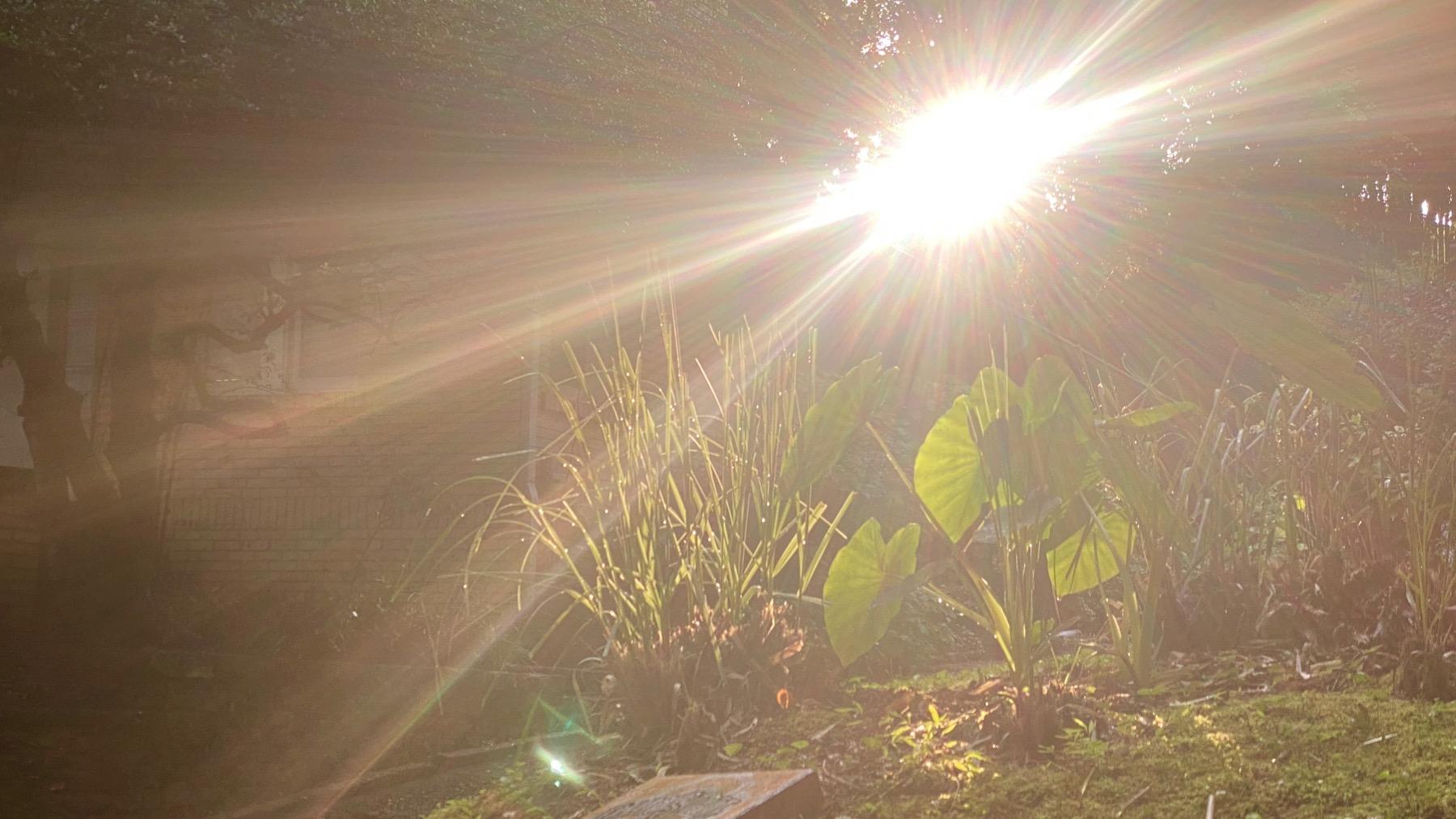 Sun arrives