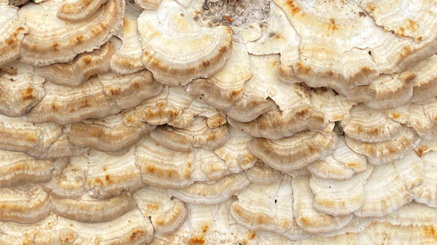 Yellowstone fungi