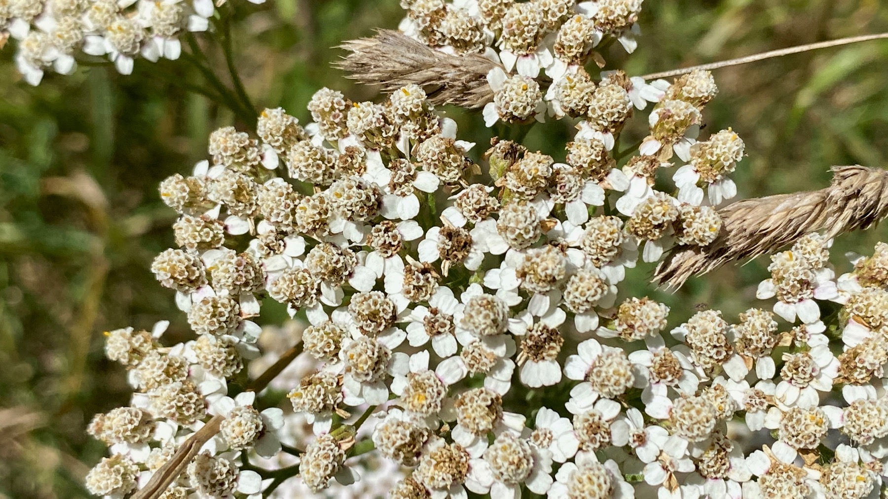 Flower capture
