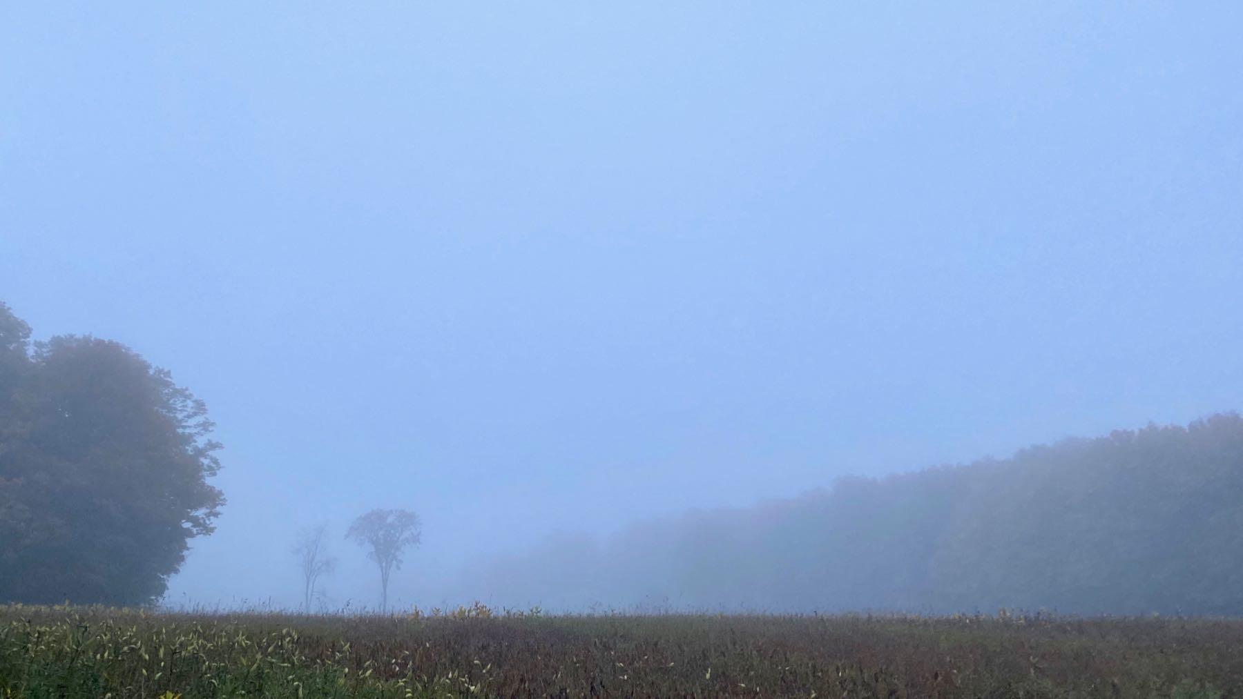 Foggy murky