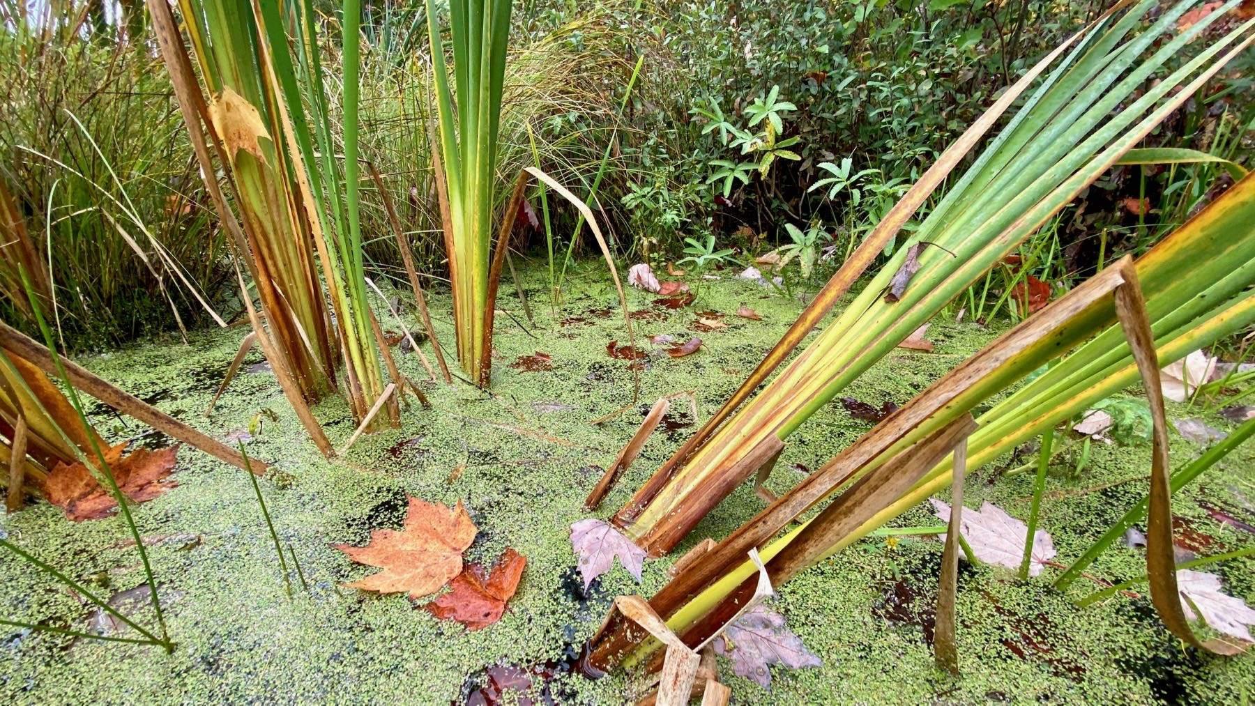 Swamp ditch