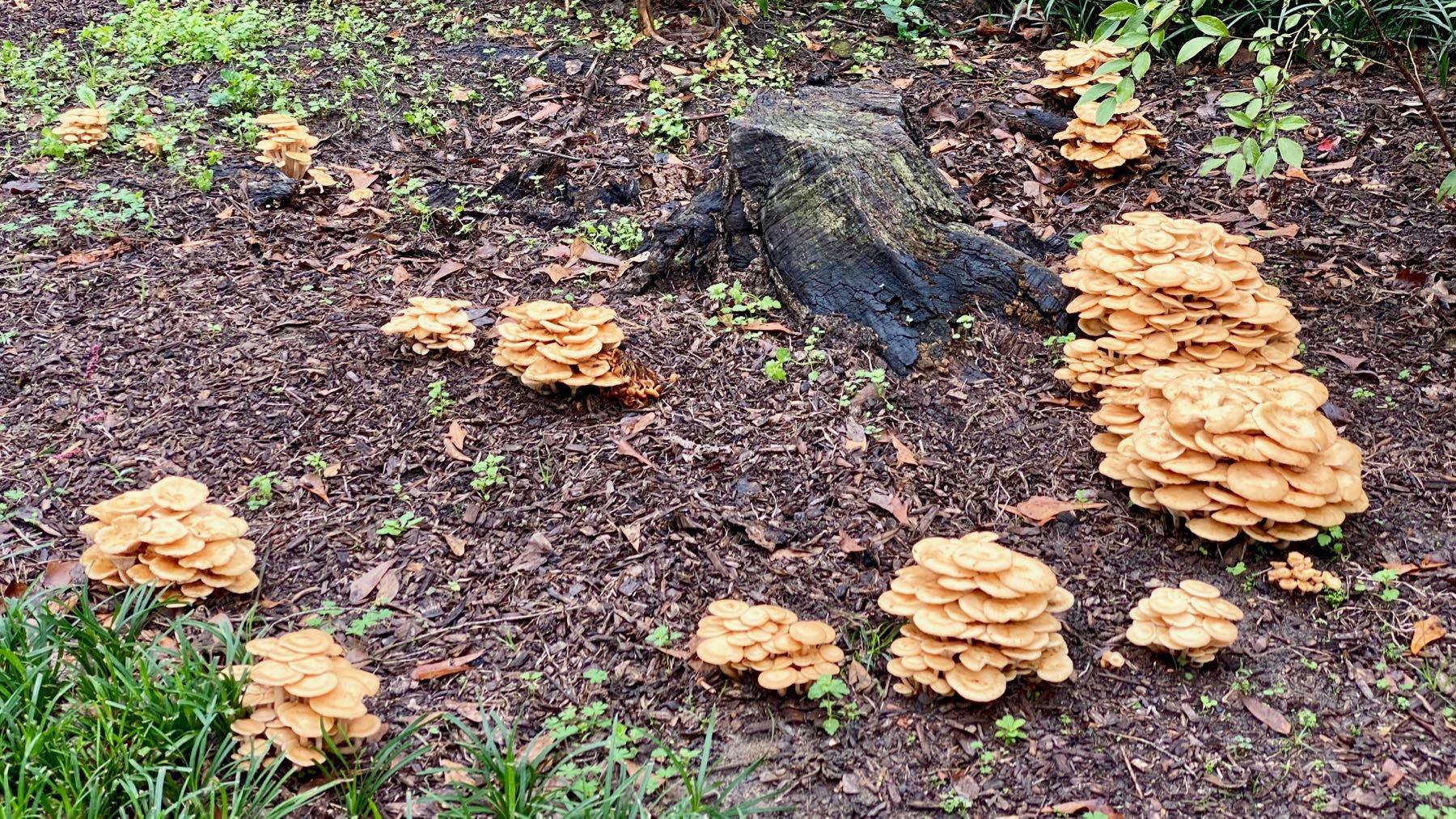 Shroom mounds