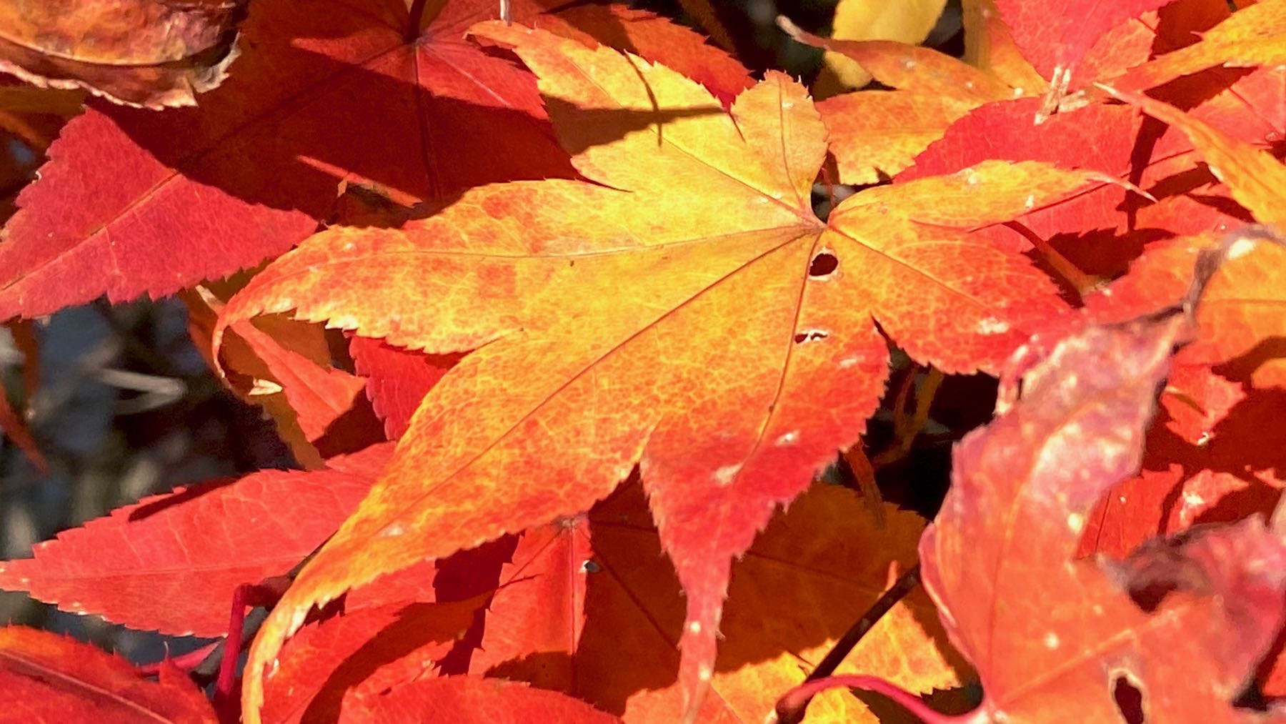 Acer color
