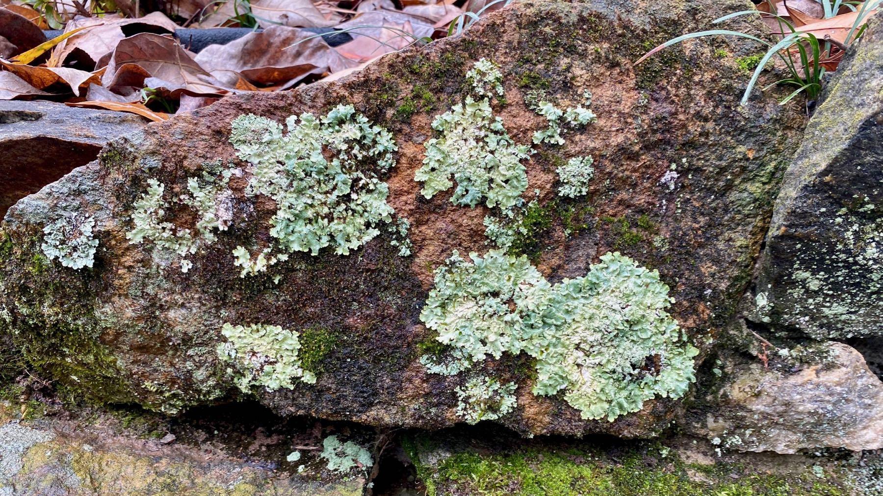 Lichen display