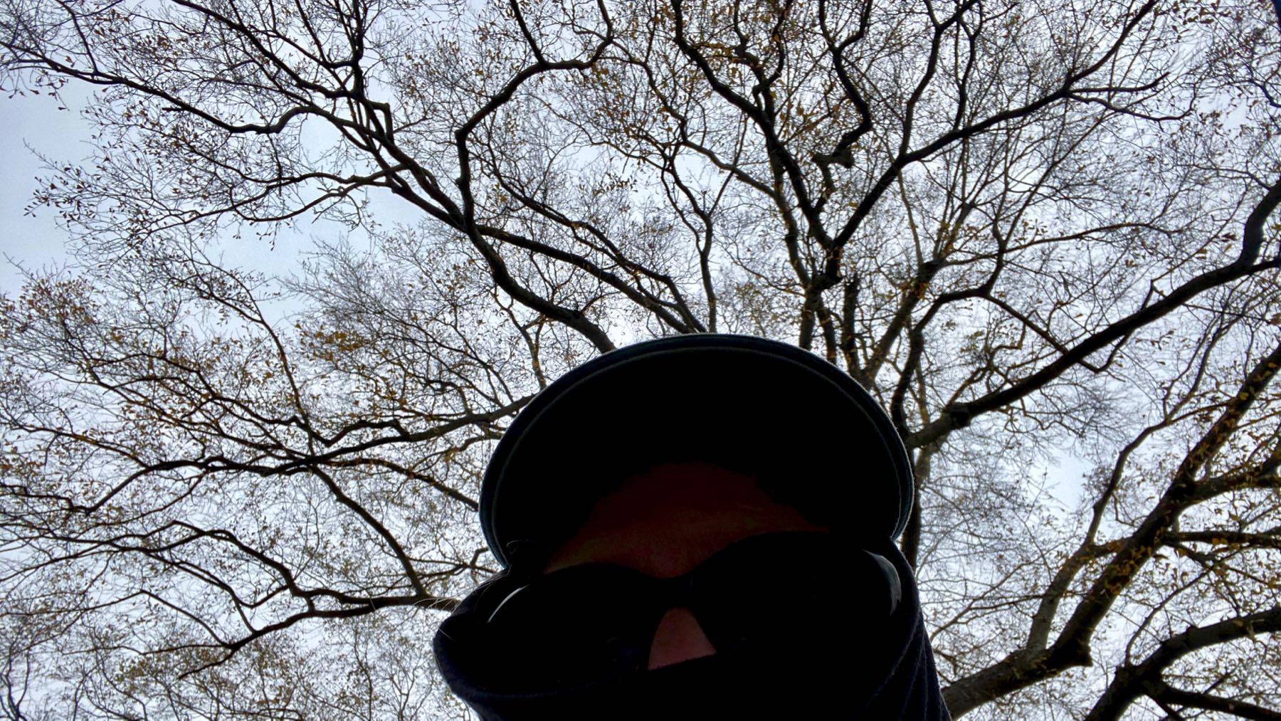 Mistletoe search