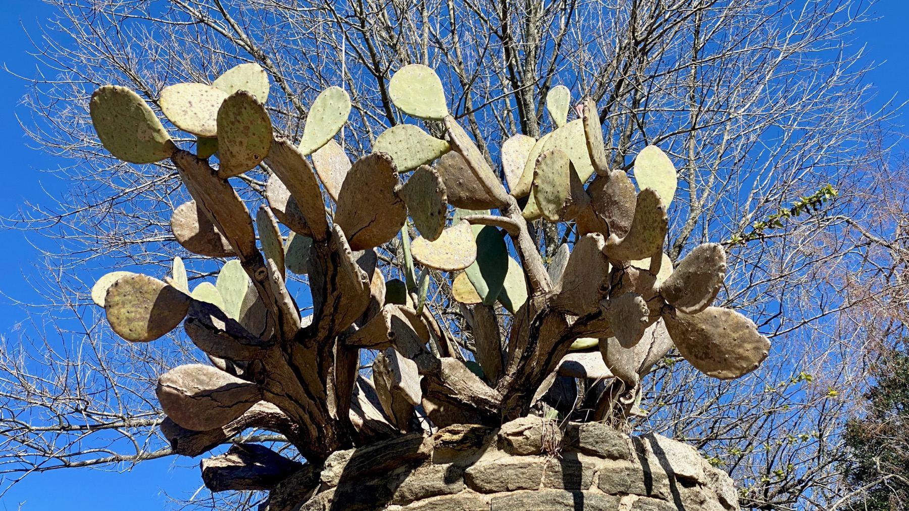 Cactus above