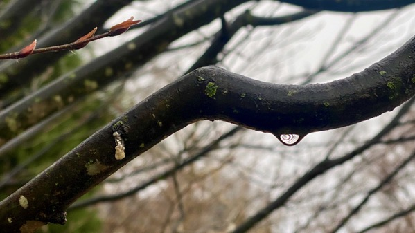 Droplet under branch