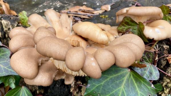 Stump fungi strange