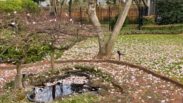 Petals on ground