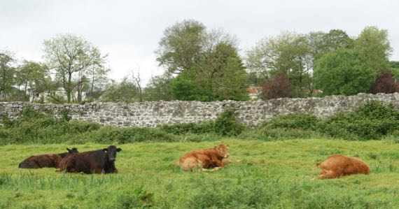 Athenry medieval city wall