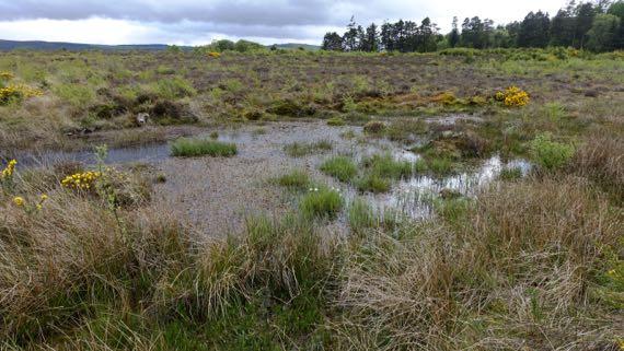Culloden marsh