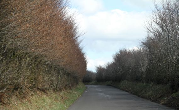 Exmoor road hedges