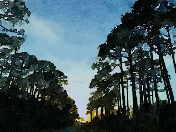 FL sunset pines waterlogued ADJ