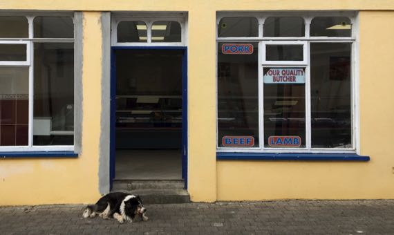 Kenmare butcher dog