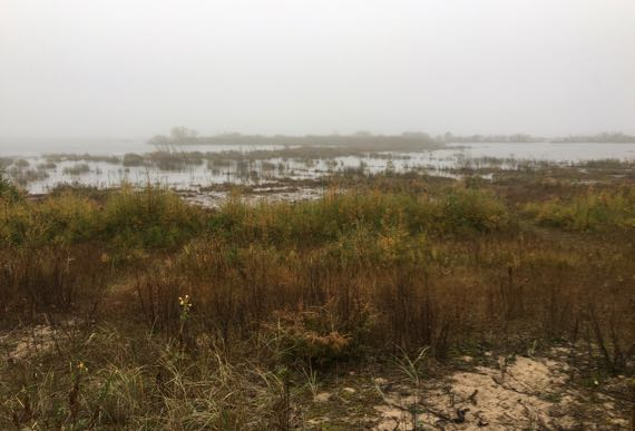 LakeMich shore