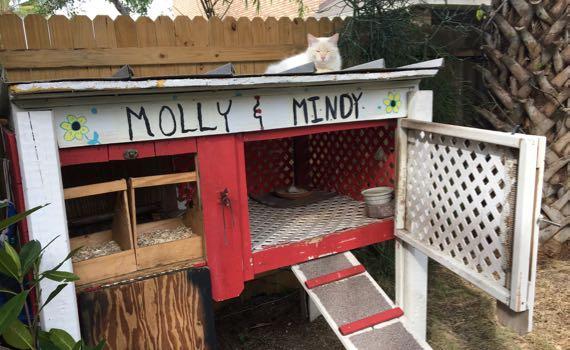 Molly Mindy cat