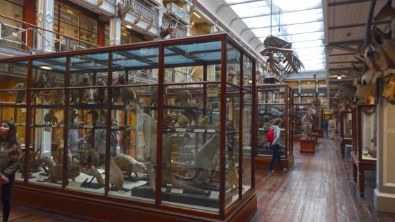 MusNat Hist upper gallery