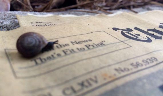 NYT snail