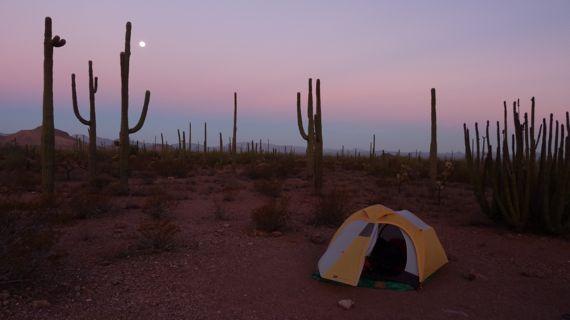 Organ_Pipes_camping_2009.jpg