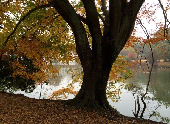PiedPk lake tree view