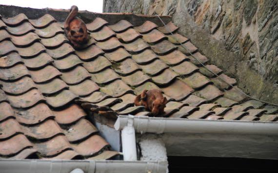 St Andrews rooftop humor