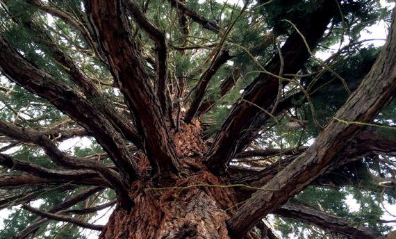 Tree above