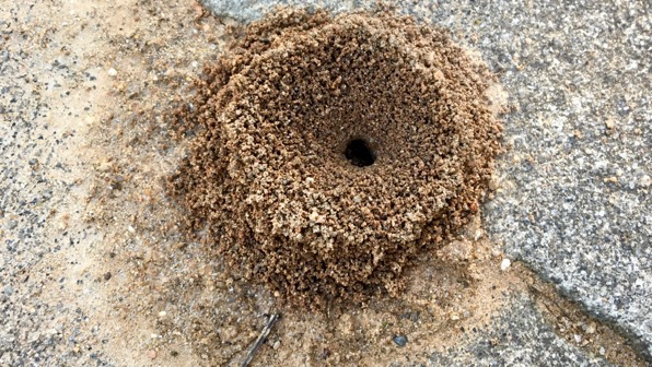 Anthill in granite