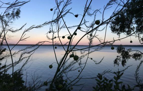 Asparagus n lake